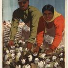 Poster Wij houden van Stachanov 1936